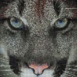 "Mozaika (projekt) ""Cougar"", 100 x 150cm"