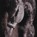 "Mozaika (projekt) ""Horse1"",  80 x 170cm"
