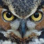 "Mozaika (projekt) ""Sowa"", 130 x 90cm"